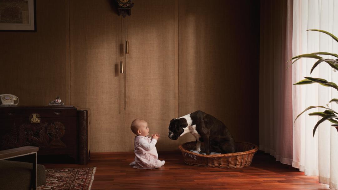 Baby met Boxer